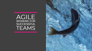 Agile working for successful teams